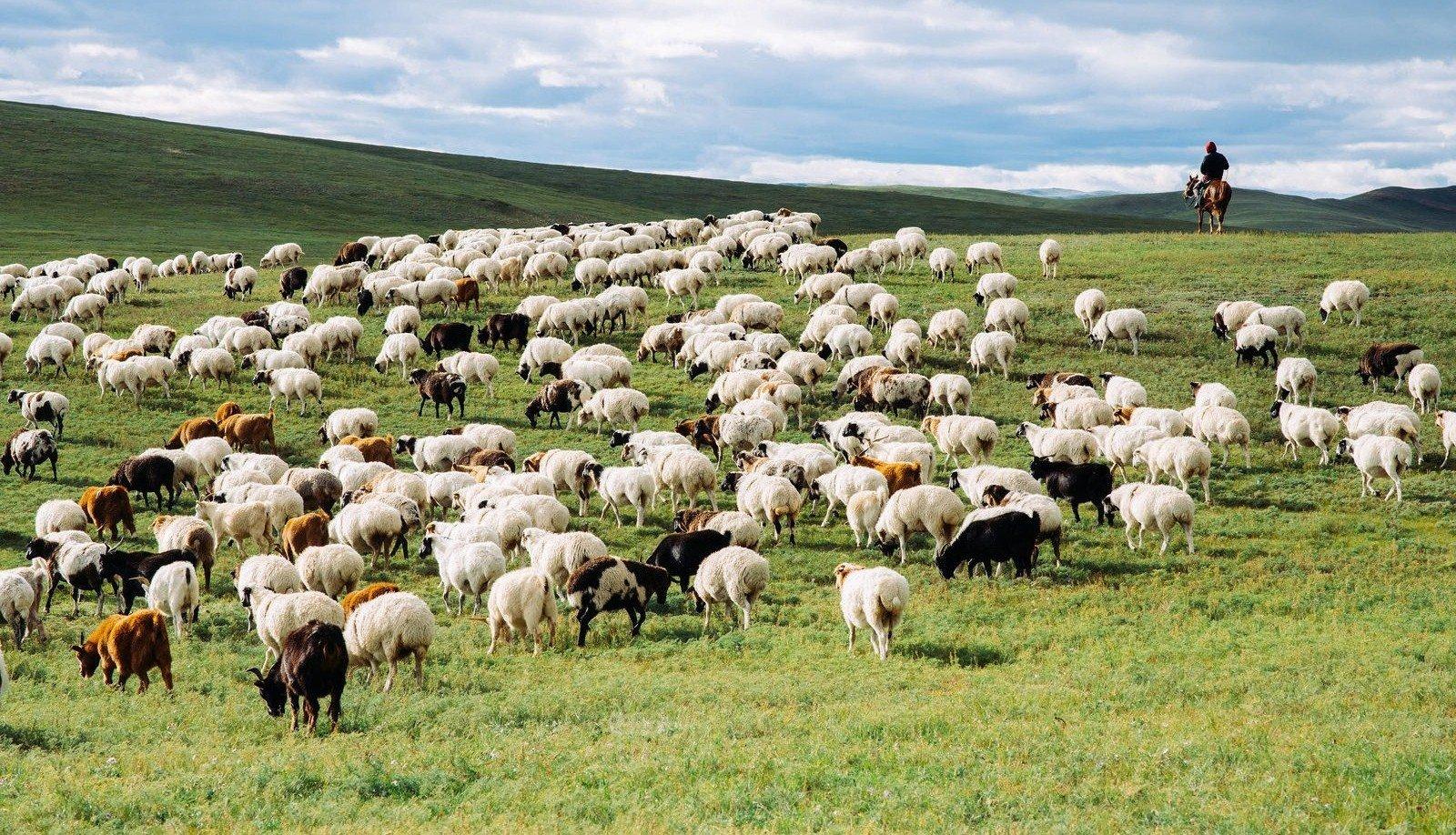 хонь-н зурган илэрц